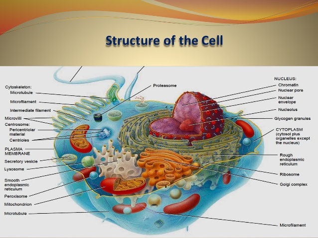 This image is showing the structure of cell