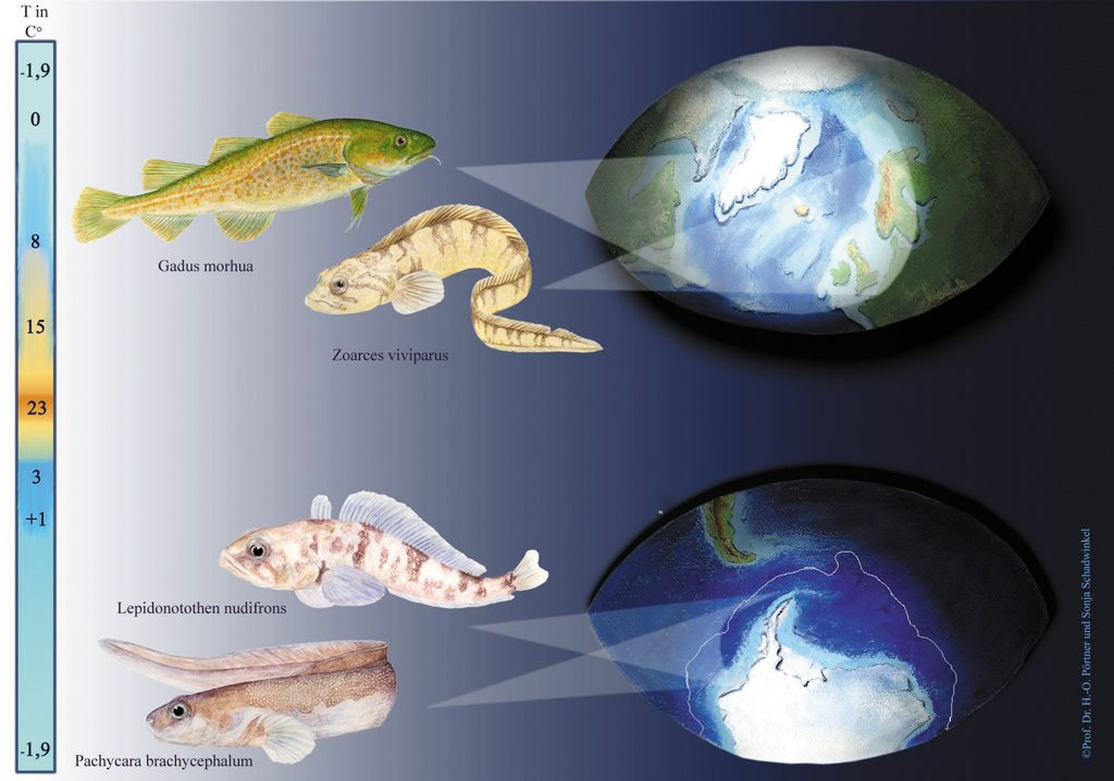 An image of Comparative and Environmental Physiology?