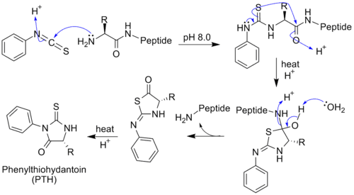 Biochemical structure of proteins