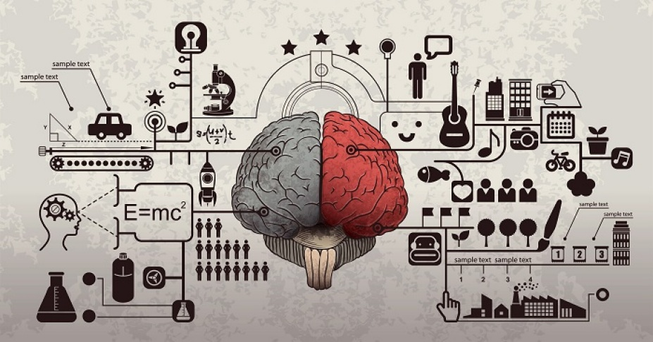 picture of the brain divided into the creative and logical side