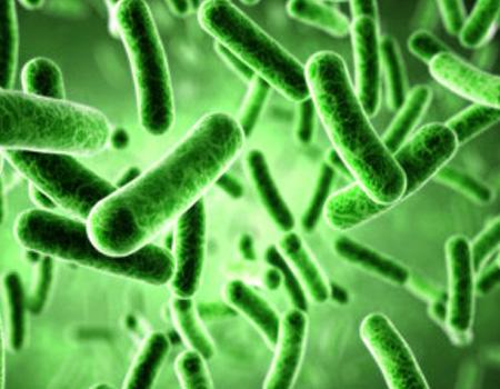 Micro -organisms