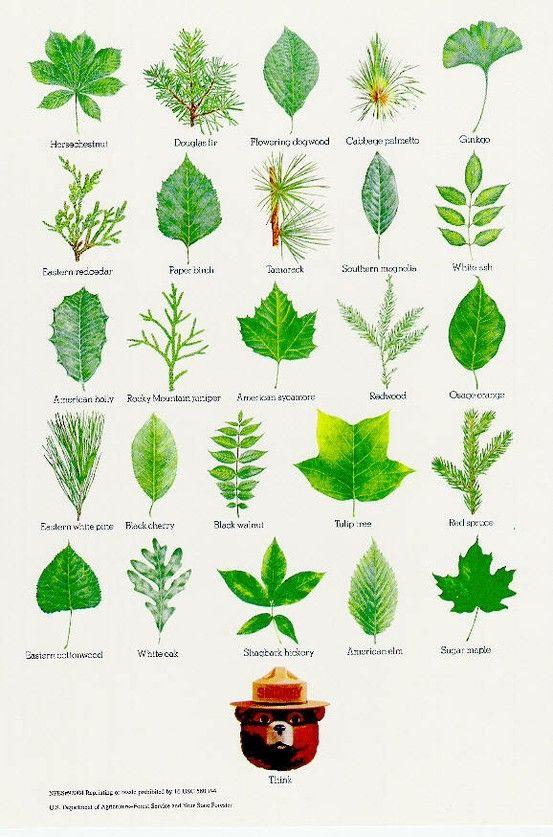 Identification of plants using leaf shape