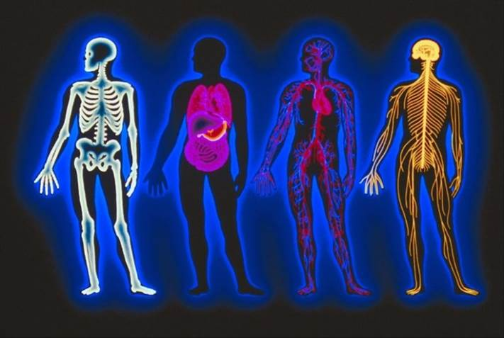 picture of the human body including different parts highlighted like the skeleton, organs, nerves and lymph system.