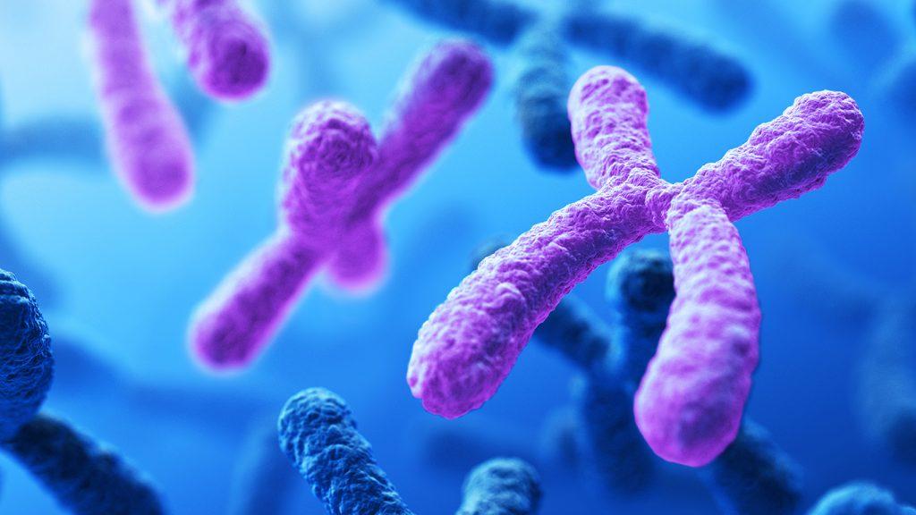 Close-up image of chromosomes.