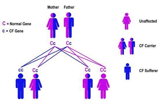 An illustration of the transfer of genes in genetics.
