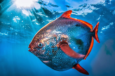 An image of a fish in water