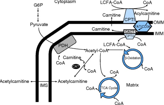 A simple metabolic processe