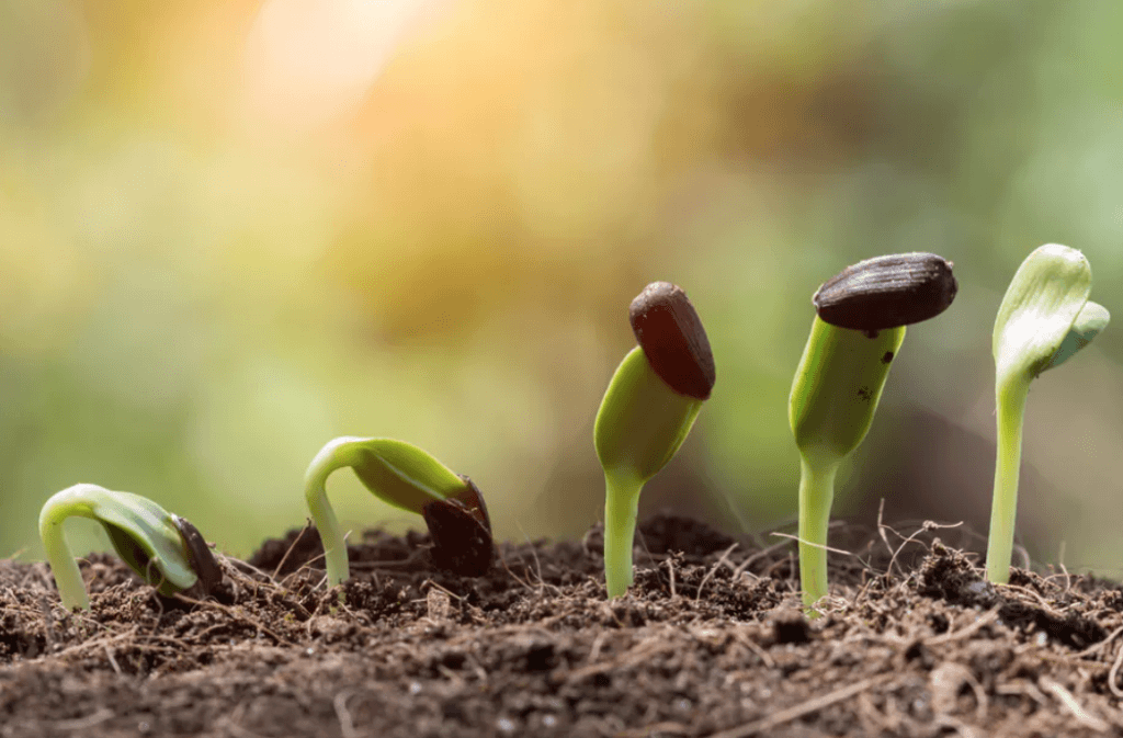 plants growing on the soil