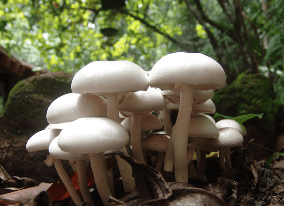 a group of white mushrooms