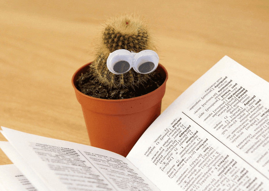 a cactus toy in front of an open book
