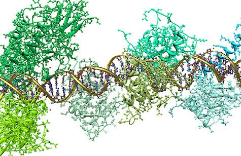 picture of DNA strand an proteins around