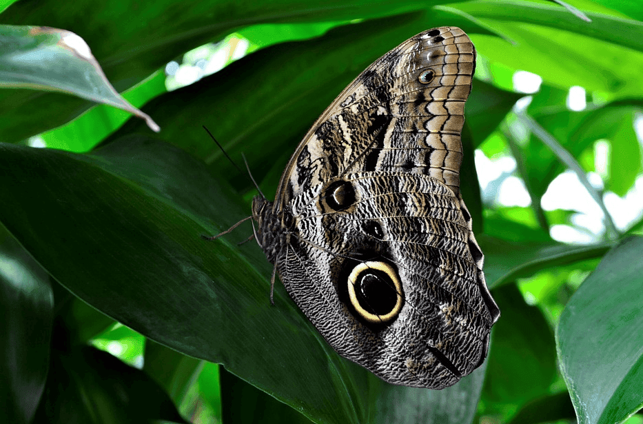 butterfly on top of a leaf