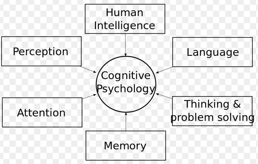 Chart illustrating the various aspects of cognitive psychology