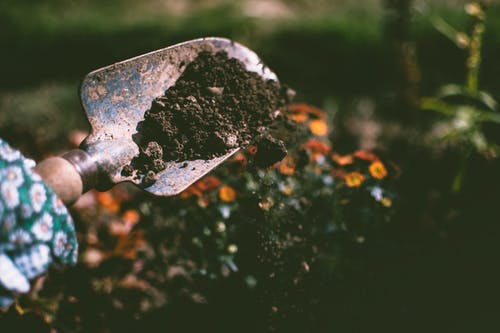picture of person digging soil to plant flowers