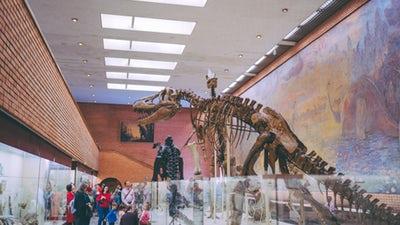 Dinosaur skeleton in showed in a museum