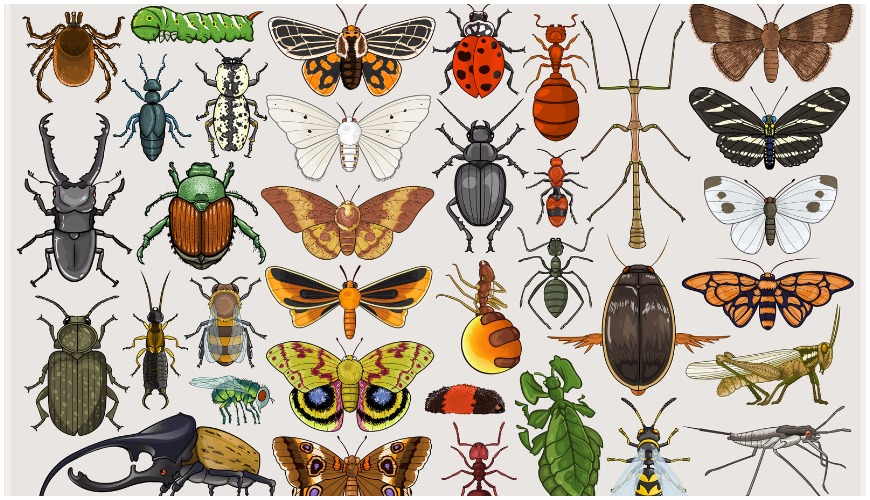 picture of a bunch of bugs like beetles and moths displayed.