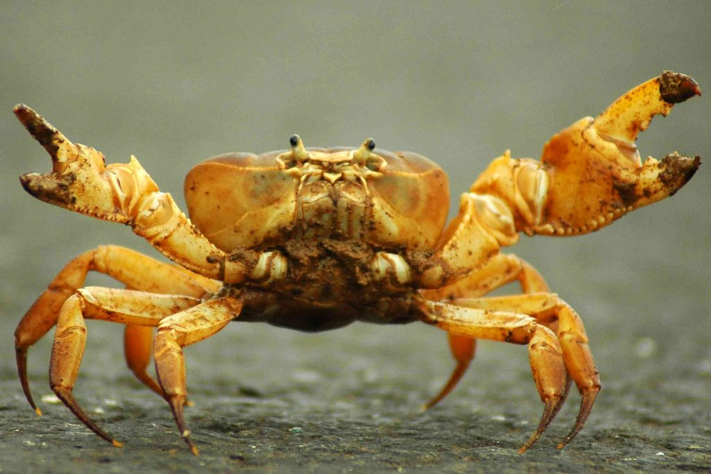 a picture of a crab