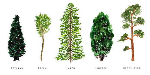 An image of paintings of different types of trees