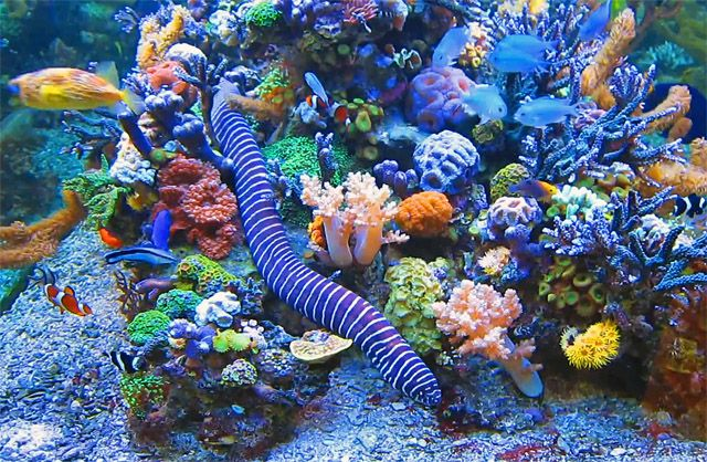 Underwater image of coral, fish, and other marine life.