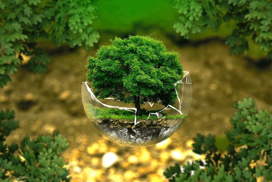 a photo of a miniature tree inside a broken spherical glass