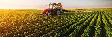 A tractor in a cornfield