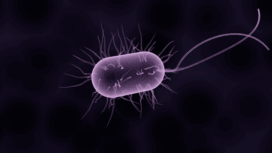 an illustration of a bacteria
