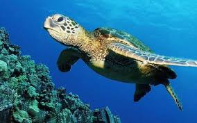 There are many amazing creatures that inhabit the marine ecosystems around Florida.