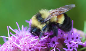 Picture of bee pollinating flower close up