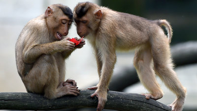 Image of two monkeys looking at something.