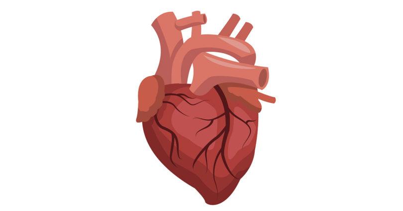 Cartoon of human heart