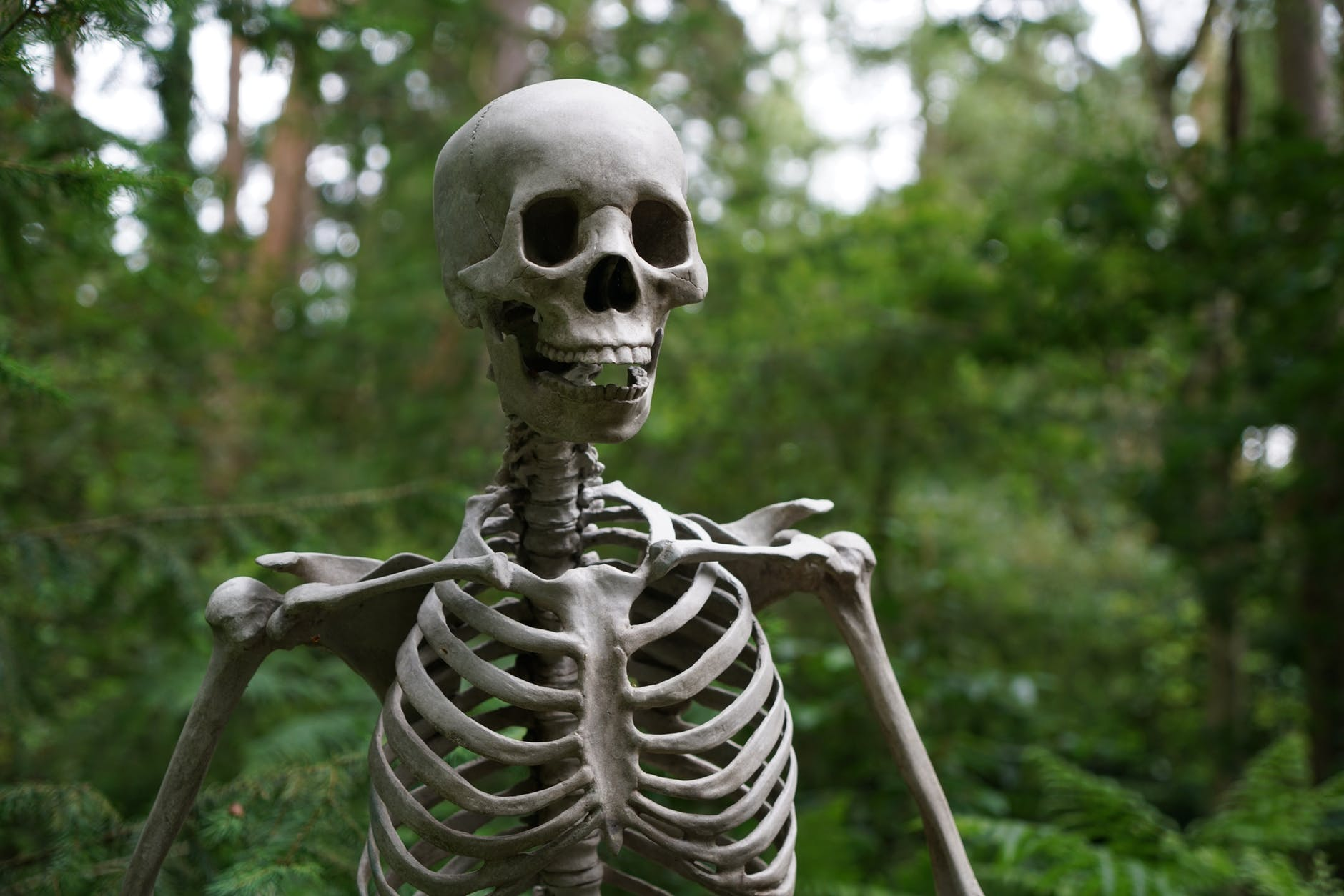 Picture of a skeleton in the forest