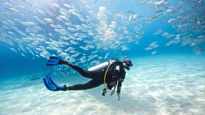 Underwater image of a person SCUBA diving with a school of fish.