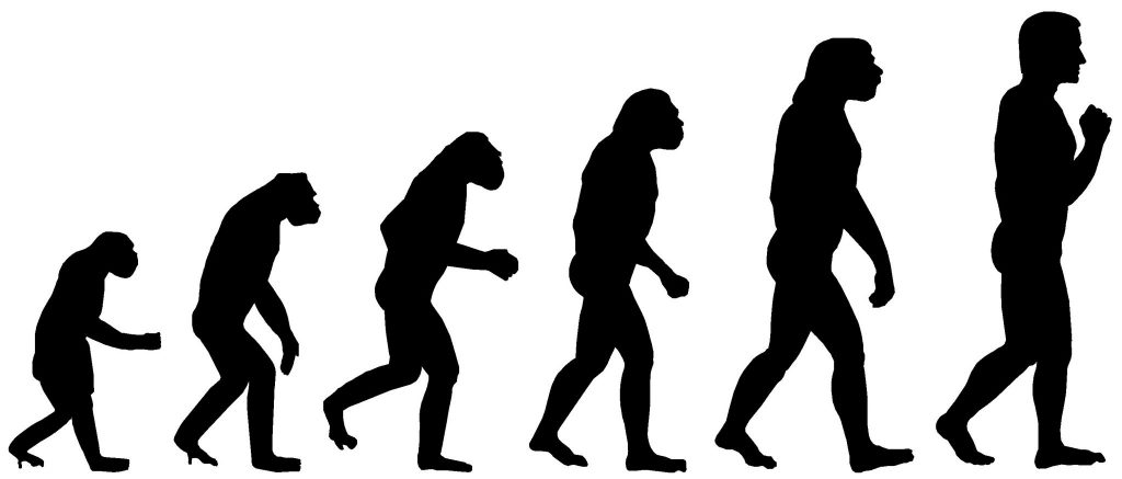 The stages of evolution left to right from monkey to man