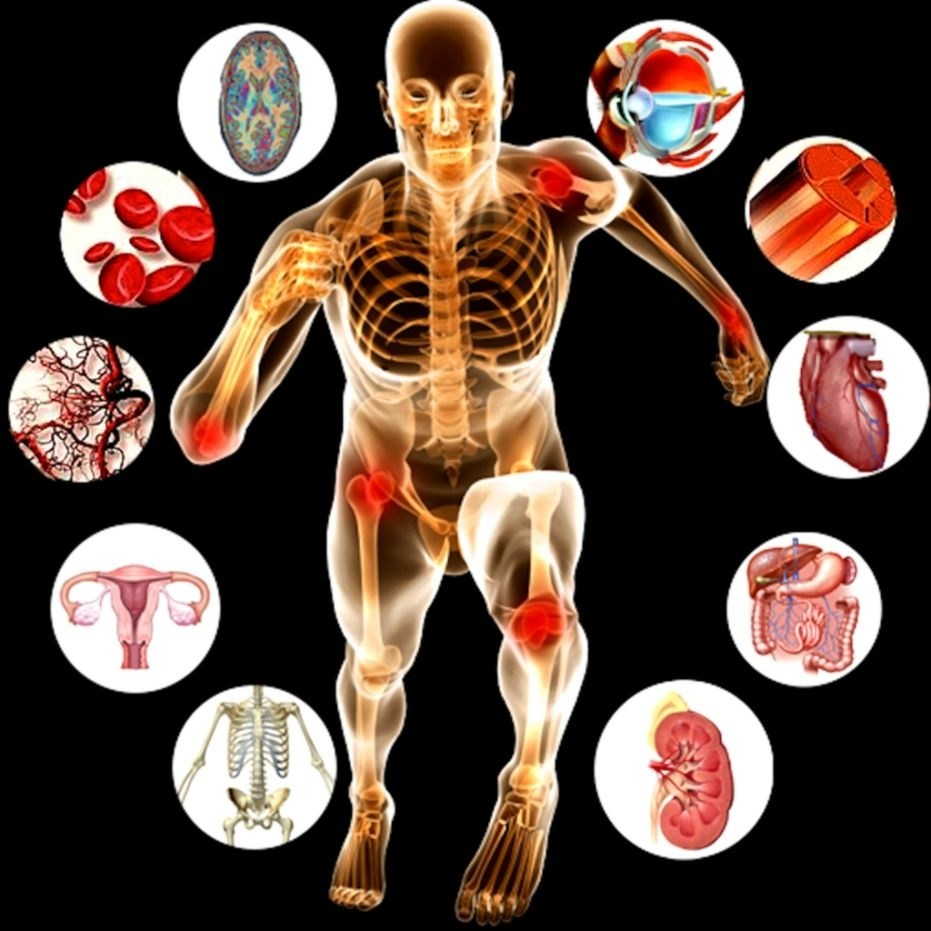 skeleton in middle, black background,  surrounded by different organ systems