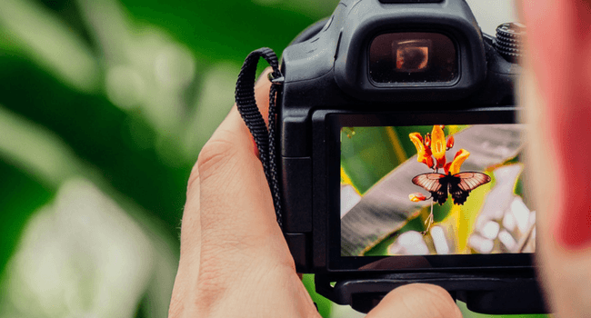 A person capturing  an image using a digital camera