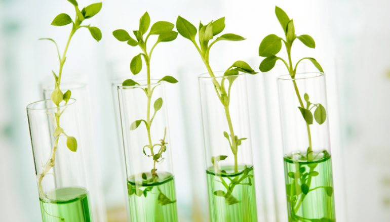 plants in a test tube