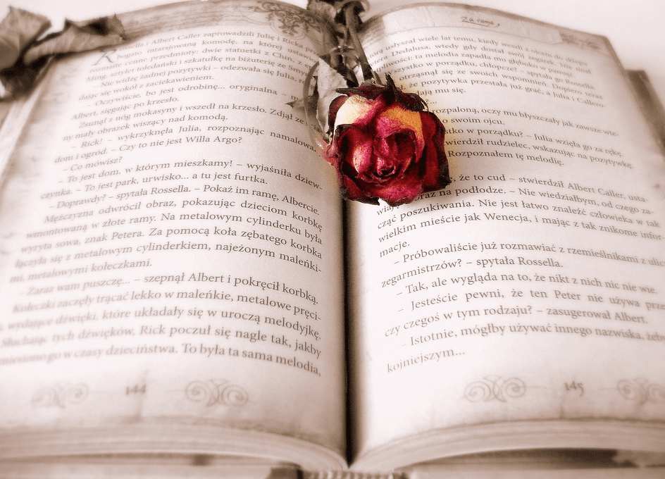 rose on top of a book