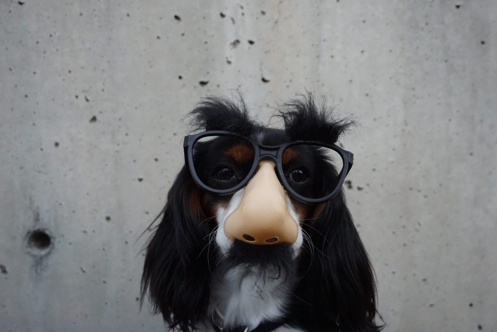 A dog wearing disguise glasses with a nose and mustache.