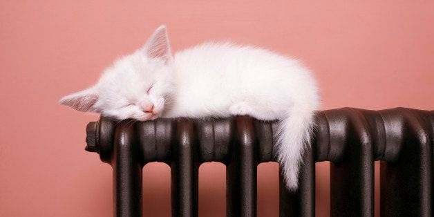 A picture of kitten sleeping.