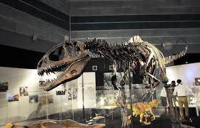 dinosaur remains on display at museum