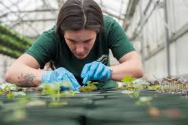 a person with gloves studying the plants