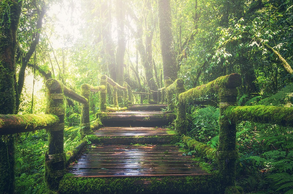 old bridge with moss growing all over it