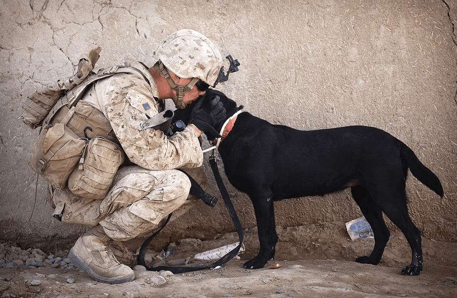 soldier kissing his dog on the head