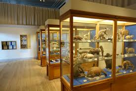 an array of animals and their body on display at a museum