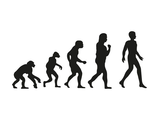 The evolution theory illustrated.
