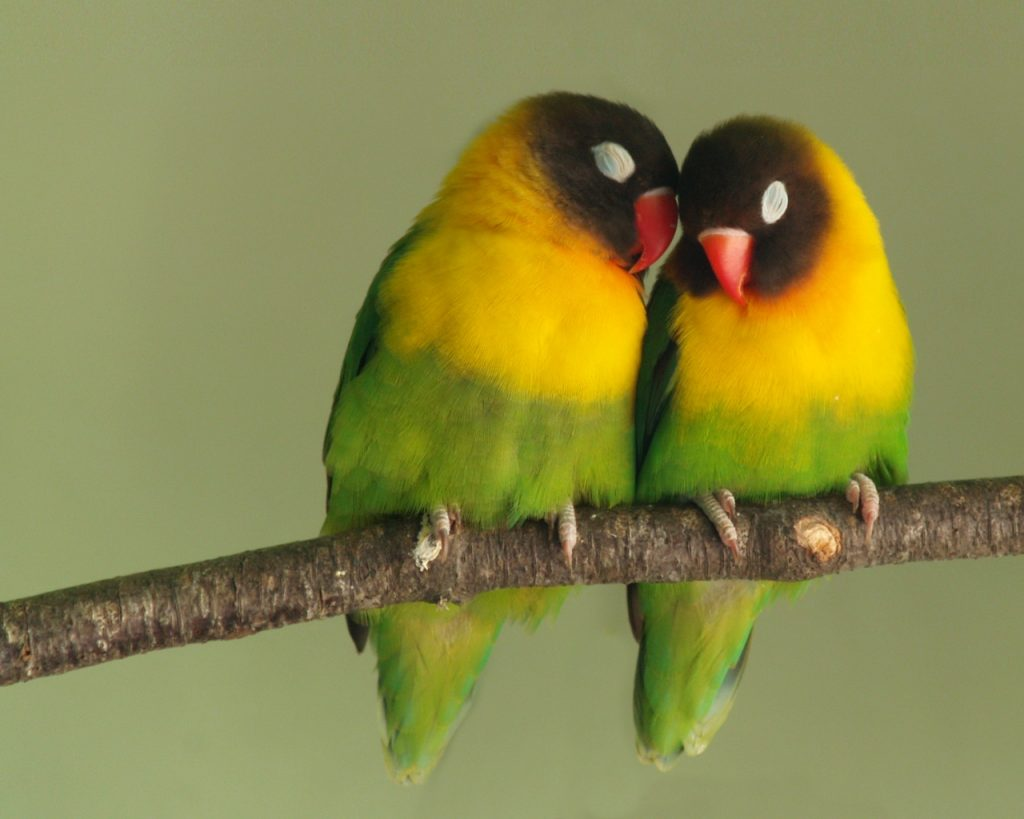 Two colorful birds on a tree branch close together.
