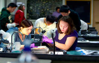 Students working in one of the many laboratories in the science complex.