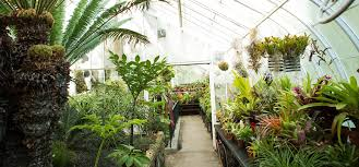 inside view of greenhouse