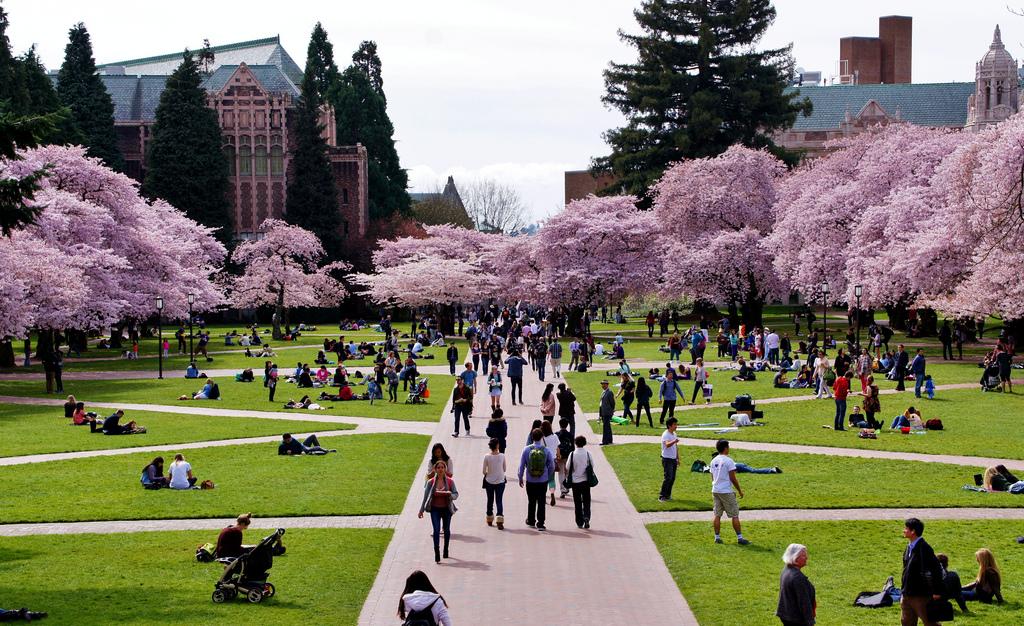 Top 10 Sports at the University of Washington